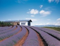 Kooroomba Vineyard & Lavender Farm