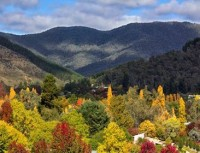 Boynton's Feathertop Winery