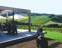 Montalto Vineyard & Olive Grove
