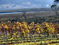 Panorama Vineyard